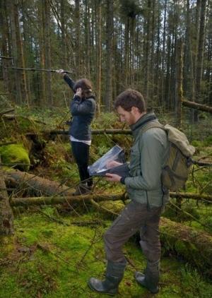 Tracking Pine Marten